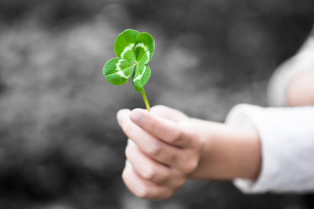 lucky charm: A child hand present a four-leaved green clover leaf as a gift (color key)