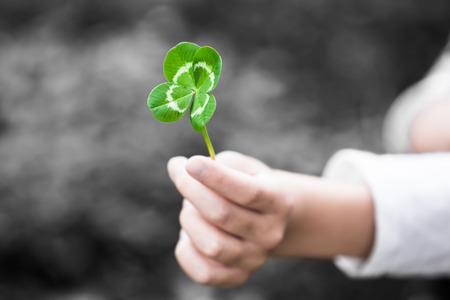 Een hand kind zich een vier-leaved groen klaverblad als een geschenk (toets) Stockfoto