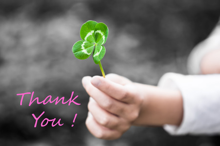 textual: A child hand present a four-leaved green clover leaf as a gift (color key with textual message THANK YOU!) Stock Photo