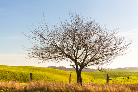 Bare tree at a sunny day near fenced hilly grassland Stock Photo