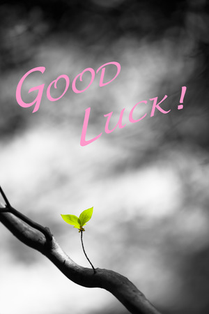 heartfelt: Pink colored good luck wish and two small fresh leaves at the tree in front of blurred grey background