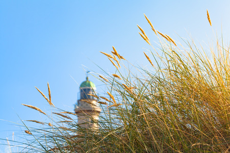 tuft: Tuft of beach grass in the sunshine and a lighthouse tower at the side background