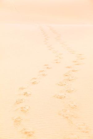 desert footprint: Double footprint trail towards the horizon at the golden sand of desert