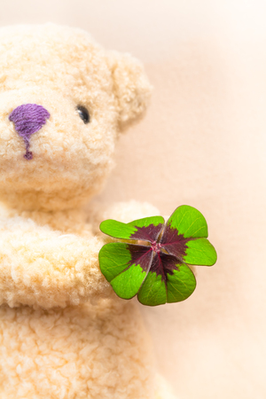 fourleaved: Green and red colored lucky clover leaf at the hand of a teddy bear in background (copy space) Stock Photo