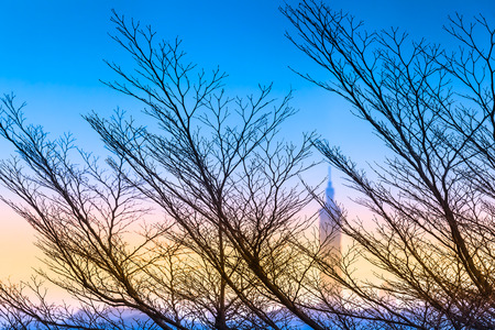 Windswept trees and branches without leaves at colorful winter twilight evening in Taipei, Taiwan