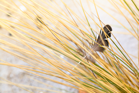Bird feather held in the grass at beach sand Stock Photo