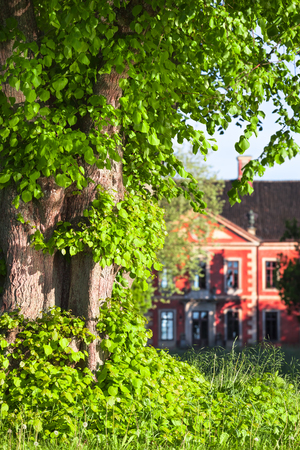 Detail of trunk and leaves of linden tree with old red manor house