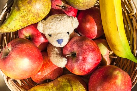 Cute little teddy bear inside fruit basket with apples, pears, banana
