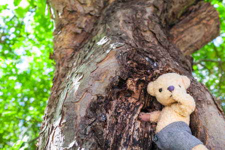 Little cute teddy bear searching for some honey at beehive in a tree hole (copy space)