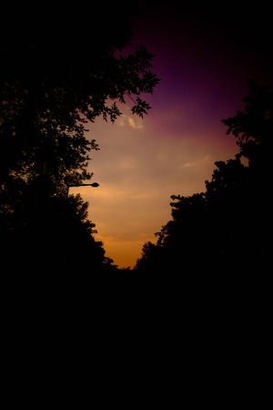 the backlighting: Backlighting of trees during sunset