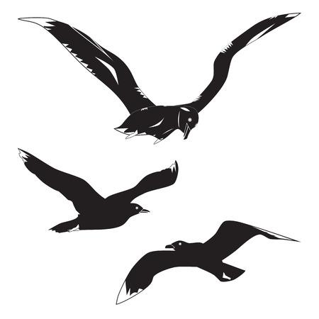 Black silhouettes of gulls and albatross. Sea birds.