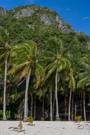 Forest of palm trees on white sand beach with cliff backdrop and clear blue sky. Stock Photo