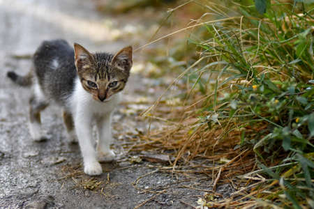 a situation alone: Cute stray kitten cat on mud path next to tall grass verge with depth of field and room for text.