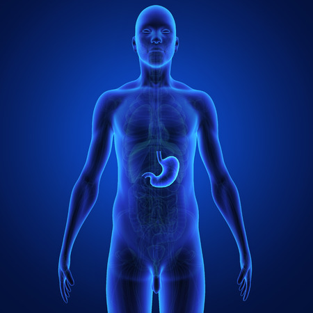 sphincter: Stomach Stock Photo
