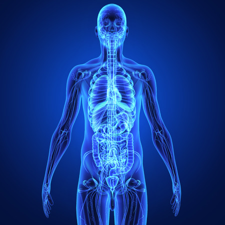 臓器 写真素材