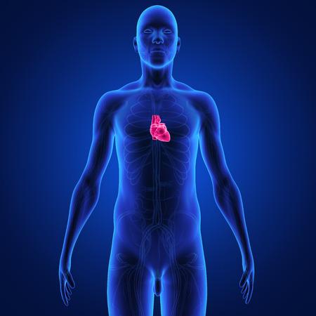 left atrium: heart