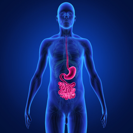 human mouth: digestive system