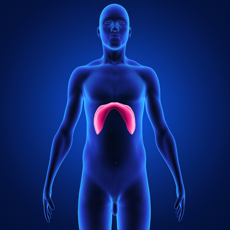 nasal cavity: diaphragm Stock Photo