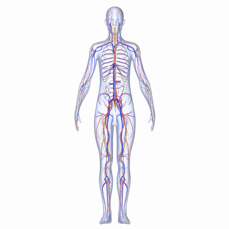 Nervensystem Standard-Bild - 33255843