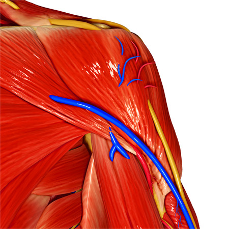 hand muscles photo