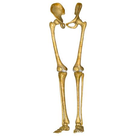 sacroiliac joint: Pelvic hip with legs