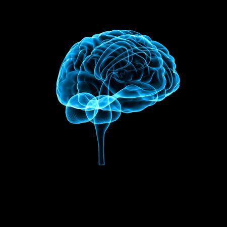 healthy brain: Brain Stock Photo