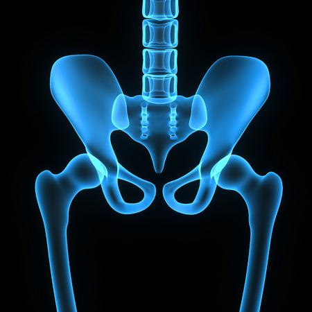 Pelvic hip bone photo