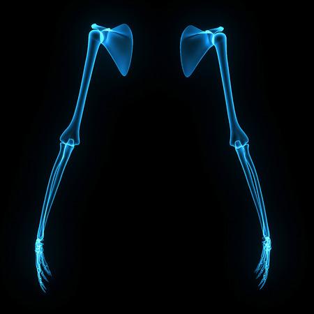 forearm: Skeleton hands