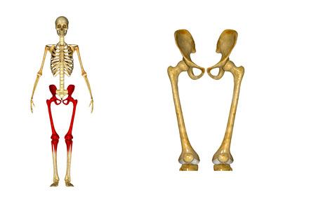 sacroiliac joint: Hip with Femur