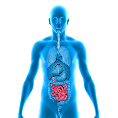 Small intestine photo