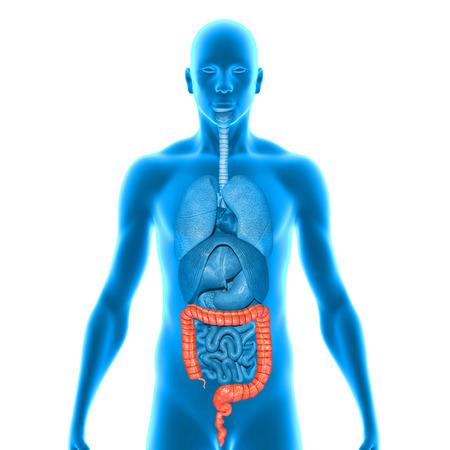 colostomy: Large intestine