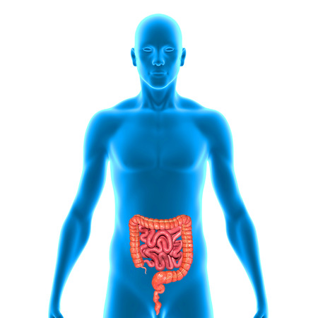 from small bowel: Small and large intestine Stock Photo