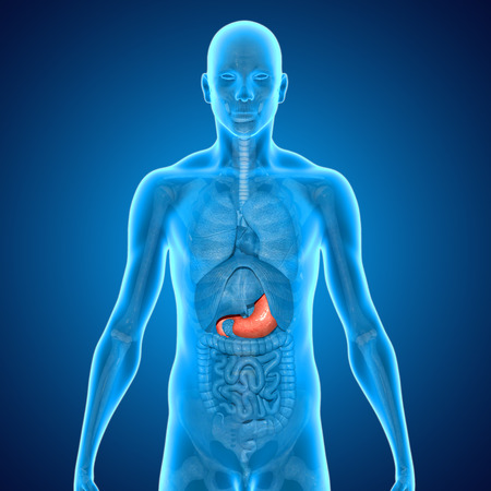 stomache: Stomach Stock Photo