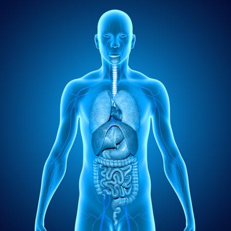 organs Stock Photo