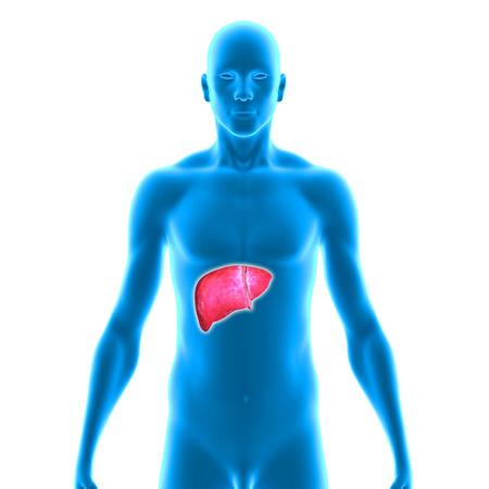 liver cancer: Liver