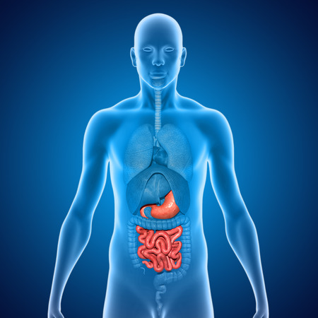 from small bowel: Stomach and small intestine