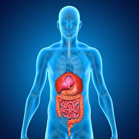 Organs photo