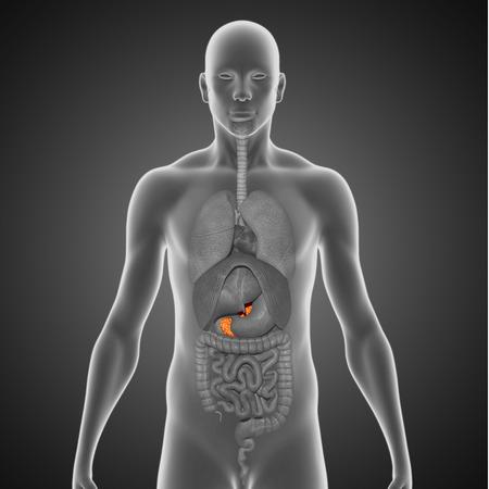 pancreatic cancer: Pancreas