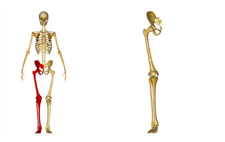 Right Lower Limb