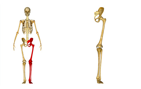 lower limb: Left Lower Limb