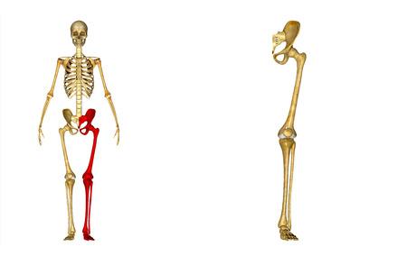 sacroiliac joint: Left Lower Limb