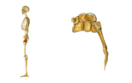 proximal: Wrist