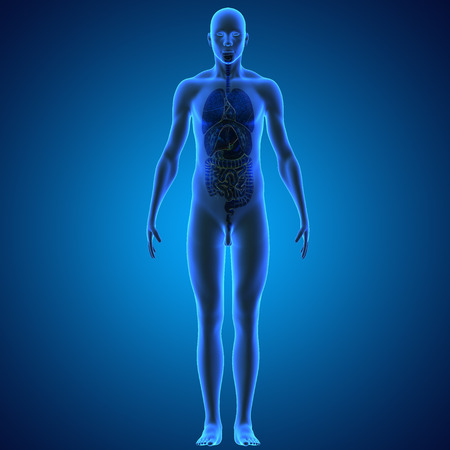 body man: �rganos Humanos