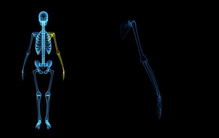 forearm: Skeleton hand
