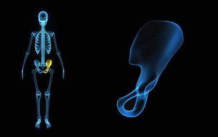 pelvic: Pelvic hip bone