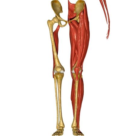 nude male body: Leg muscles