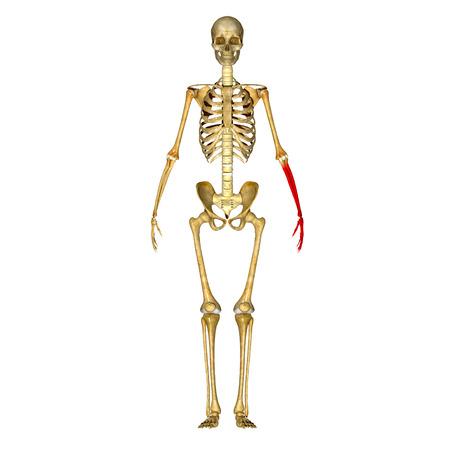 meth: Skeleton hand