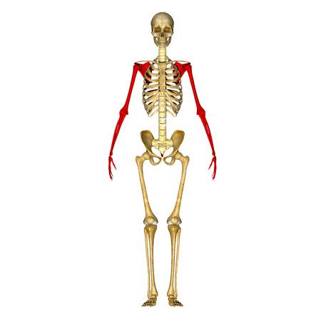 meth: Skeleton hands