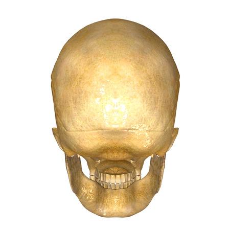 neck injury: Skull back