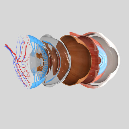 cornea: Eye anatomy